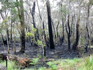 Cleopatra Study Area after fire. Stake 1 at bottom left.